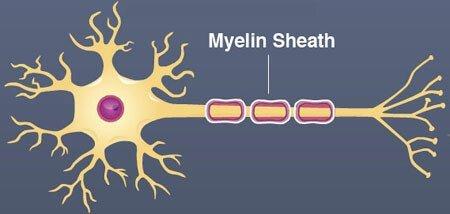 FLOW en de rol van het autonome zenuwstelsel