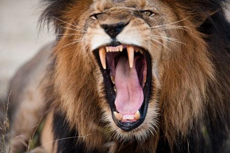De kenmerken van boosheid